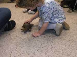 Lily and Jack (turtle ambassador from our fav nature center)